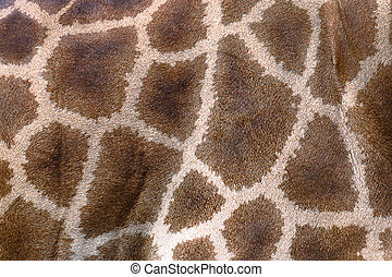 Textured skin of giraffe.