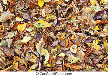 textured view of autumn leaves