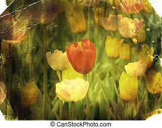textures, старый, postcard., весна, бумага, марочный, tulips., фото