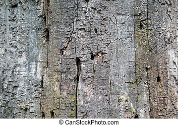 textuur, huid, van, de, boom.