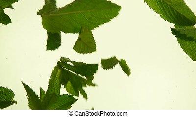 thé, grand plan, menthe, frais, feuilles vertes