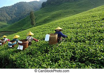 thé, prendre, gens