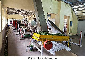 thé, usine, inde