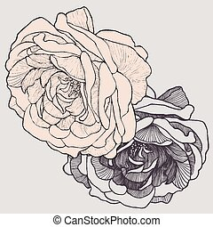 thé, vecteur, illustration., rose, hand-drawing.
