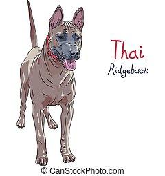 thaï, race, vecteur, debout, ridgeback, chien rouge