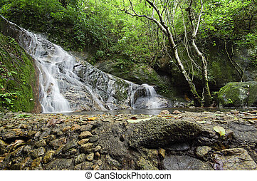 thaïlande, chute eau, nord, forêt