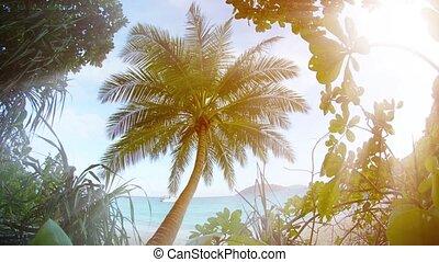 thaïlande, cocotier, plage, solitaire, méridional