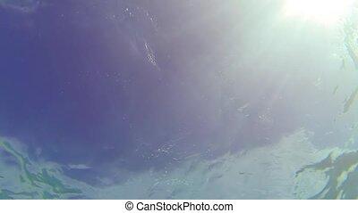 thaïlande, perspective, fermé, snorkeler, bottom-up, similan...