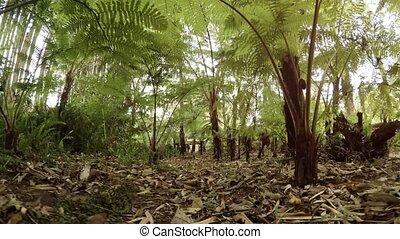 thaïlande, vie sauvage, rainforest, exotique, perspective
