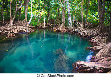 Tha pom nature trail and Crystal stream, Krabi, Thailand