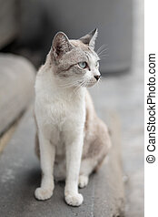 Thai cat sitting of the ladder soft focus and shallow depth of field