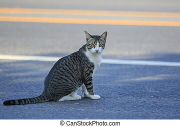thai cat sitting on traffic road and looking to camera with ...