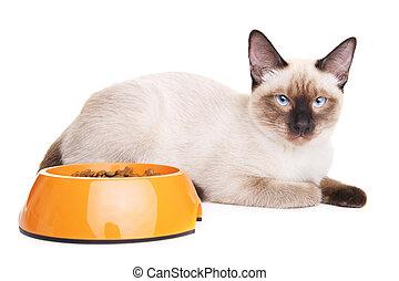 Thai Cat With Food Bowl