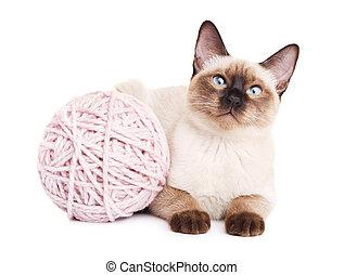 Thai Cat With Woolen Ball