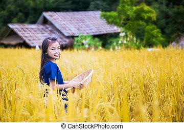 Thai child in golden rice farm