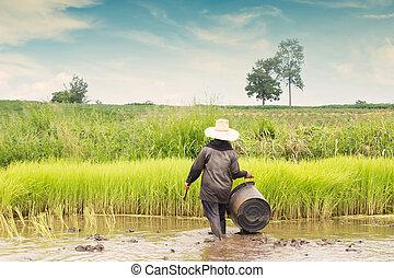 Thai Farmer Working At Rice Plantation