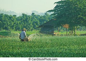 thai farmer working in agriculture plantation