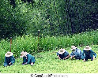 Thai gardeners - Gardeners at a Thai hotel