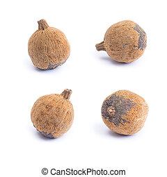 Thai herb name ceriscoides turgida Roxb. Tirveng isolated on...