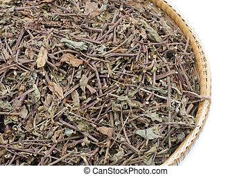 Thai herb scientific name Orthosiphon aristatus isolated on...