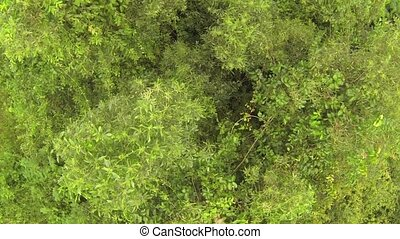 Thai jungle trees, aerial view from above
