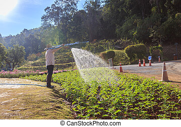 Thai people watering the flower in the garden in Chiang Mai