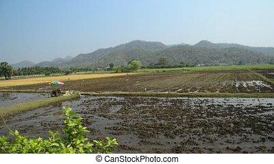 Thai rural view