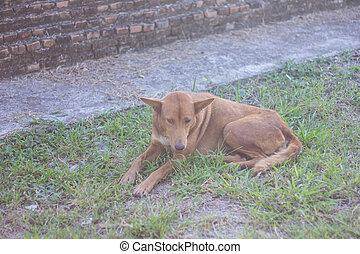 thai stray dog in grass
