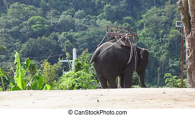 Thai taxi. - Elephant for riding. Phuket, Thailand.