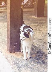 Thai white cat at home