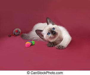 Thai white kitten playing on red