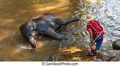 Thai young elephant was take a bath with mahout (elephant driver