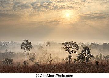 thaiföld, szavanna, táj, -ban, napkelte