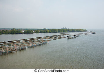 Thailand at a Oyster Farm