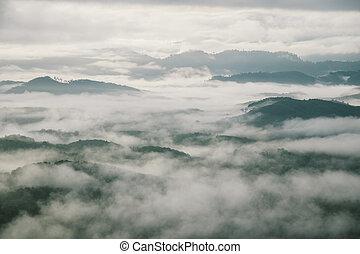 thailand, aus, nebel, wald, morgen