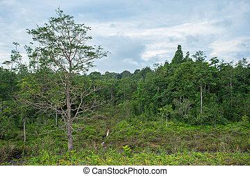 Thailand, Backgrounds, Beauty, Biology, Blue