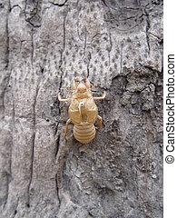 Thailand Bangkok - Cicada Case