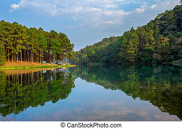 Thailand, Camping, Tent, Woodland, Forest