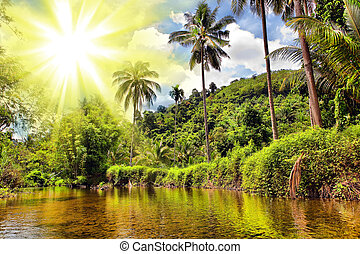 thailand, dschungel, fluß