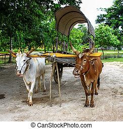 thailand, karren, ochse