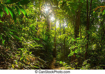 Thailand rainforest with big trees in the Koh Samui Island
