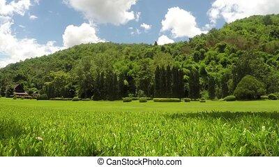 Thailand resort green field landmark