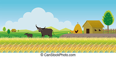 Thailand Rice or Paddy Field Background