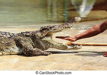 Show of crocodiles - THAILAND, SAMUTHPRAKARN -OCT 21, 2013: ...