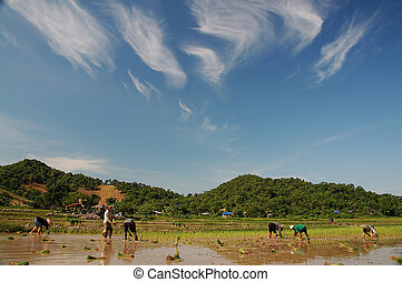 Thais farmer in beautyfull day
