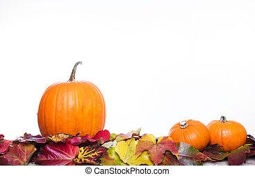 thanksgiving autumn decoration