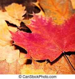 Thanksgiving Autumn Fall background with colorful leaves over rustic wooden table. Happy Thanksgiving Card
