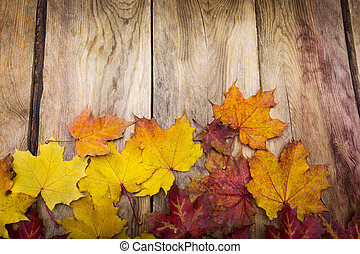 Thanksgiving background with fall maple leaves, copy space