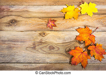 Thanksgiving background with vivid fall maple leaves, copy space