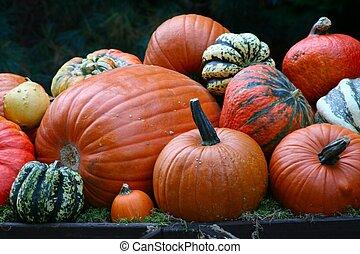 beautifull arrangement of different pumpkins